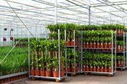 Specifieke steunmaatregel sierteelt en voedingstuinbouw